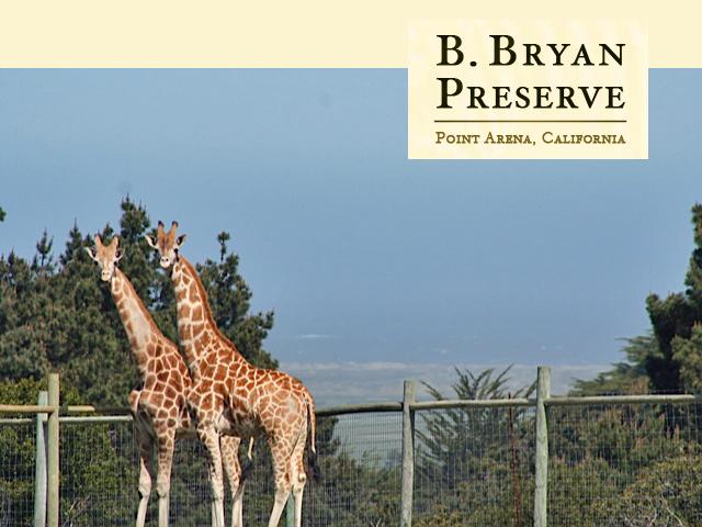 B Bryan Preserve